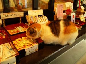 愛宕神社 猫