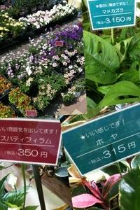 近所の園芸店
