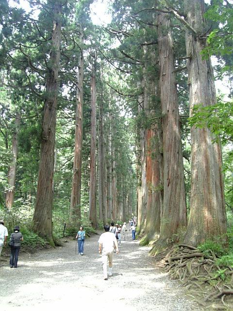 樹齢400年の杉並木